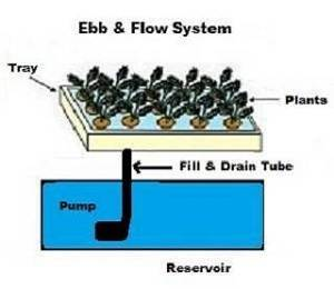 Ebb and Flow System