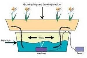 hydroponicwicksystem